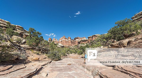 Wanderin auf einem Wanderweg durch Felsformationen  The Needles District  Canyonlands Nationalpark  Utah  USA  Nordamerika