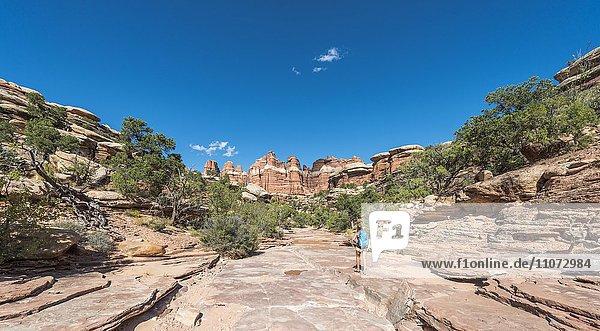 Wanderin auf einem Wanderweg durch Felsformationen  The Needles District  Canyonlands Nationalpark  Utah  USA  Nordamerika