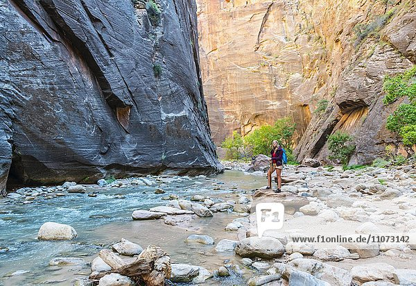 Wanderin steht auf Felsen am Fluss  Zion Narrows  Engstelle des Virgin River  Steilwände des Zion Canyon  Zion Nationalpark  Utah  USA  Nordamerika