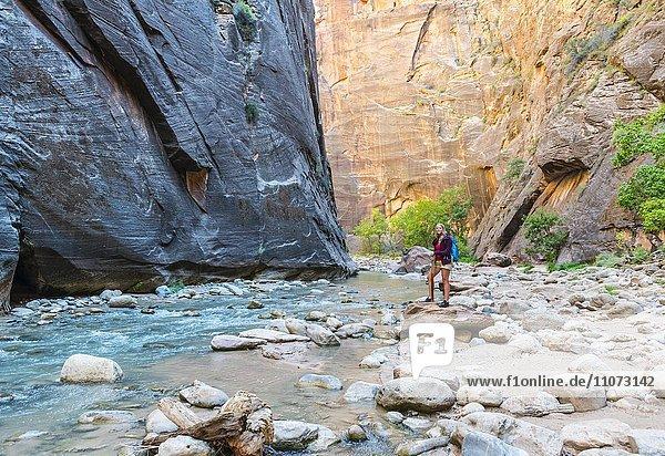 Wanderin steht auf Felsen am Fluss  Zion Narrows  Engstelle des Virgin River  Steilwände des Zion Canyon  Zion Nationalpark  Utah  USA  Nordamerika