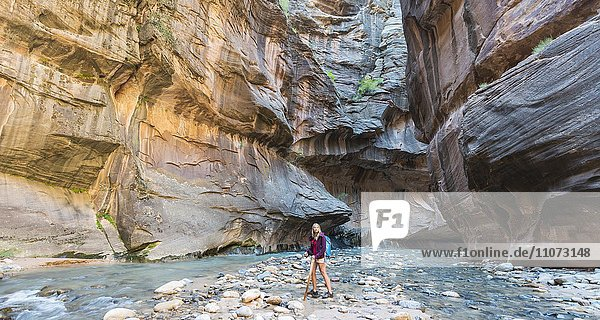 Wanderin läuft im Fluss  Zion Narrows  Engstelle des Virgin River  Steilwände des Zion Canyon  Zion Nationalpark  Utah  USA  Nordamerika