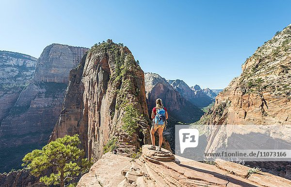 Wanderin bei Aussichtspunkt  Angels Landing  Zion Canyon  Zion Nationalpark  Utah  USA  Nordamerika