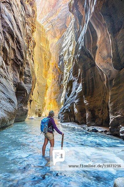 Wanderin steht im Fluss  Zion Narrows  Engstelle des Virgin River  Steilwände des Zion Canyon  Zion Nationalpark  Utah  USA  Nordamerika