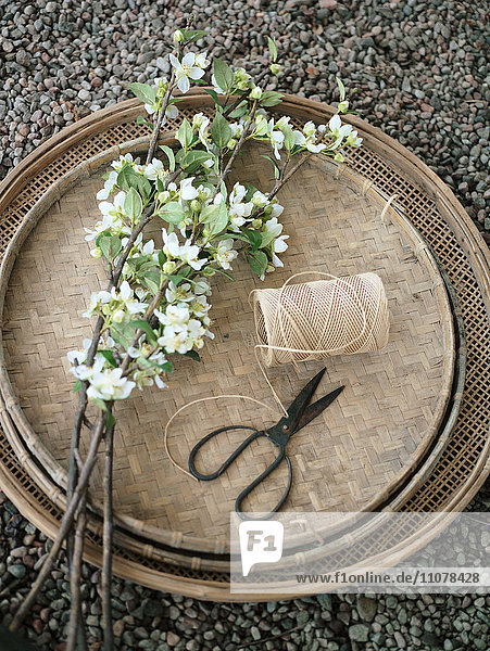 Scandinavia  Sweden  Nacka  View of tray with flower  scissors and thread  elevated view