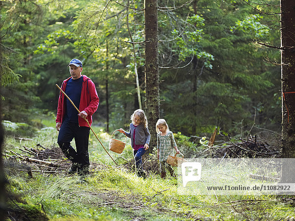 Father with daughters picking mushrooms