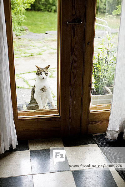a cat looking in through the window