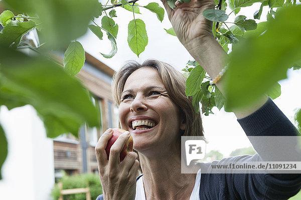 Glückliche Frau isst Apfel am Baum Glückliche Frau isst Apfel am Baum