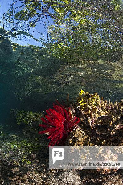 Indonesien  Raja Ampat  Salzwasser