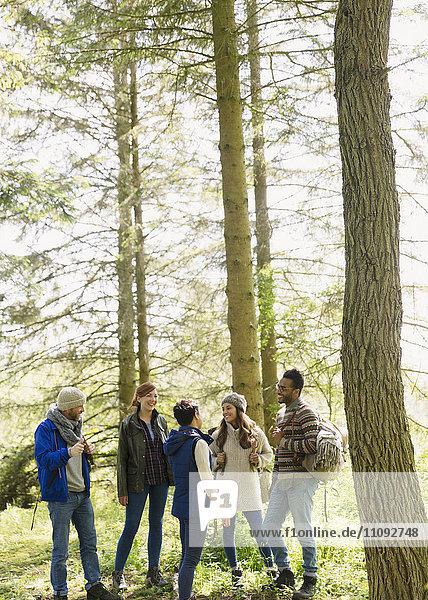 Freunde beim Reden und Wandern in sonnigen Wäldern