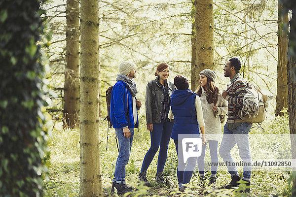 Freunde beim Wandern im sonnigen Wald