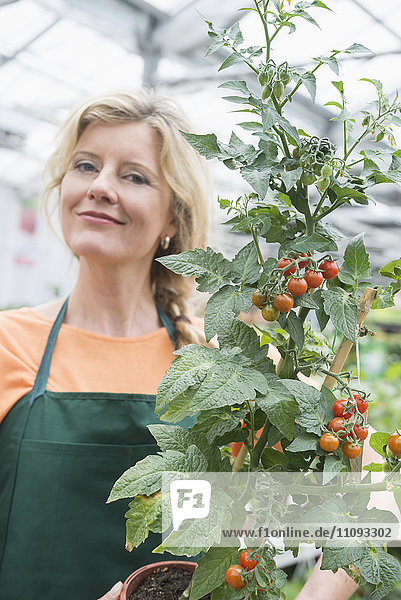 Portrait of female shop assistant holding tomato plant in garden centre  Augsburg  Bavaria  Germany