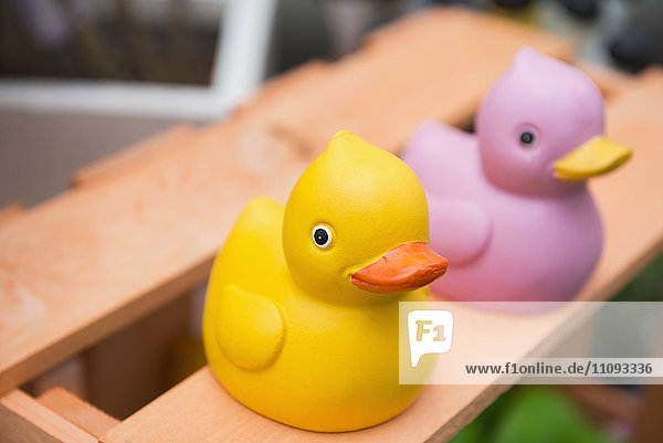 Close-up of rubber ducks in garden centre  Augsburg  Bavaria  Germany