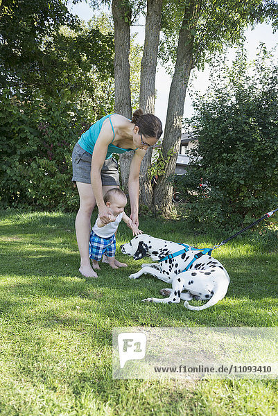 Mother assisting her baby boy stroking Dalmatian dog in lawn  Munich  Bavaria  Germany