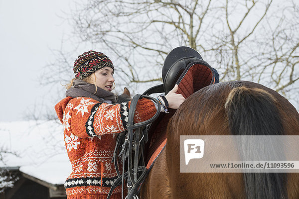 Young woman saddling her horse for riding in winter  Bavaria  Germany Young woman saddling her horse for riding in winter, Bavaria, Germany
