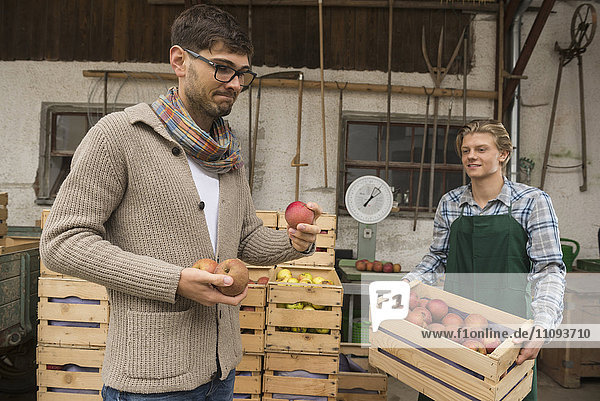 Critical wholesale purchaser buying apples in organic farm