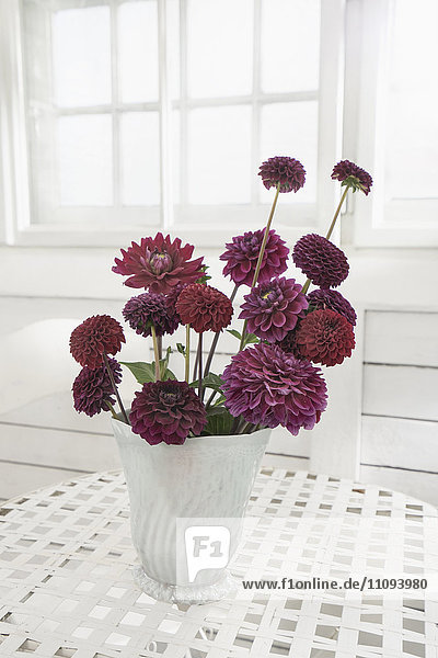 Maroon peony flowers in vase on table at glass house  Bavaria  Germany