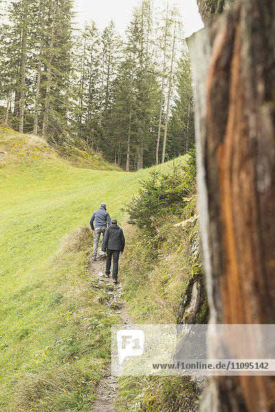 Two mature hikers walking in forest,  Austrian Alps,  Carinthia,  Austria