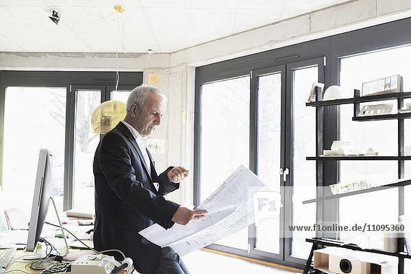 Senior businessman looking at blueprint in the office  Freiburg im Breisgau  Baden-Württemberg  Germany