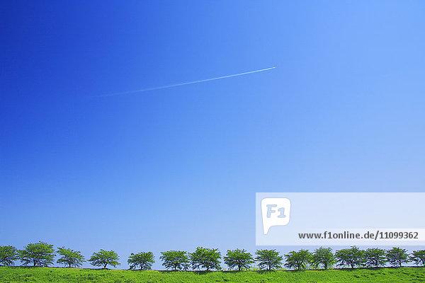 Jet Stream Over Row of Trees