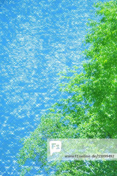 Foliage and Lake