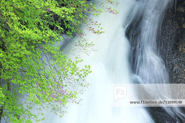 Azalea and Ryusu Falls
