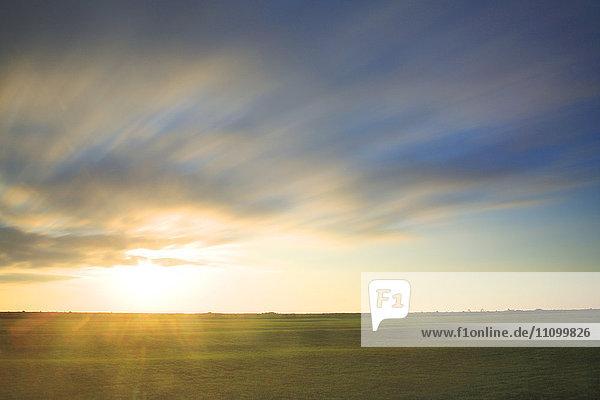 Morning light on a field