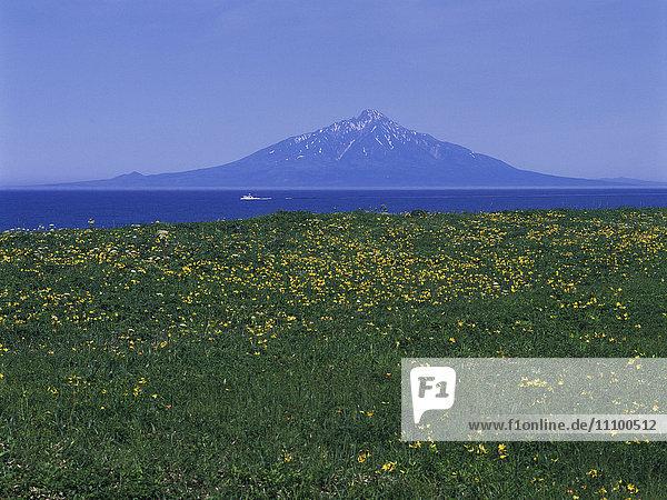 Amur Daylilies and Rishiri Island