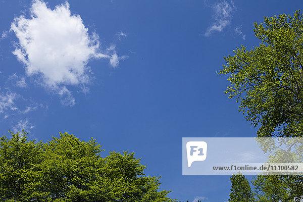 Cloud in Blue Sky