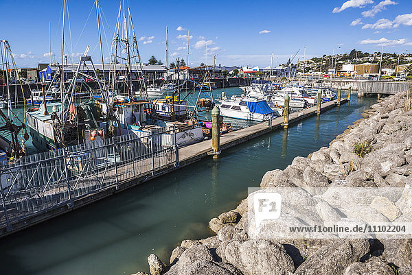 Sailing boats in Napier Harbour  Hawkes Bay Region  North Island  New Zealand  Pacific