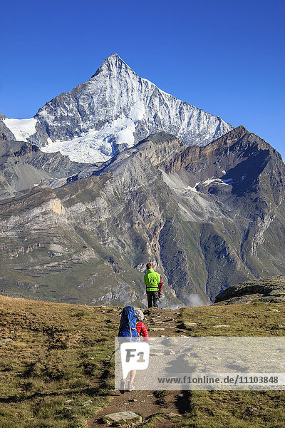 Hikers proceed towards the high peak of Dent Herens in a clear summer day  Gornergrat  Canton of Valais  Swiss Alps  Switzerland  Europe