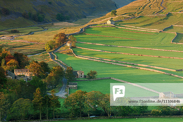 Early morning light on the dry stone walls and fields beside the Yorkshire Dales village of Arncliffe in autumn  North Yorkshire  Yorkshire  England  United Kingdom  Europe