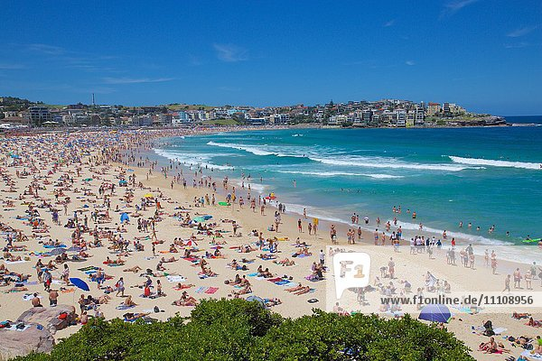 Bondi Beach  Sydney  New South Wales  Australia  Oceania