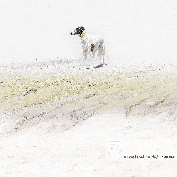 Dog standing on rocky beach