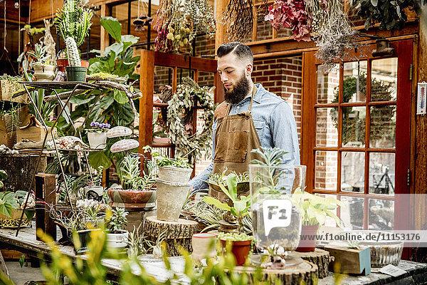 Caucasian employee with plants in nursery
