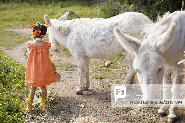 Caucasian girl playing with donkeys on dirt road Caucasian girl playing with donkeys on dirt road