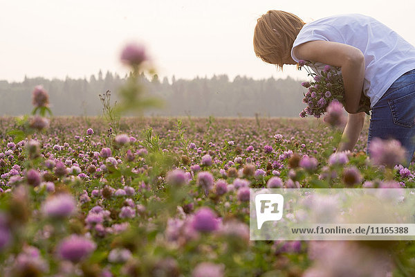 Caucasian woman picking flowers in field