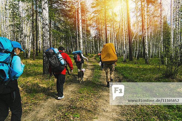 Caucasian friends backpacking with dog on forest path