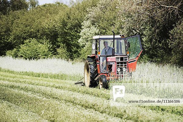 Ein Traktor  der auf einem Feld einen Schwad durch hohe Gräser und Blumen schneidet.