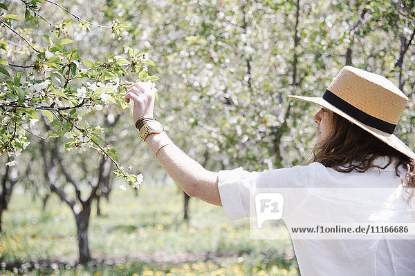 A woman in a straw hat  under an apple tree in blossom.