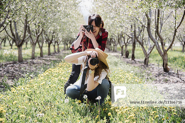 Two women with cameras taking pictures in an orchard.
