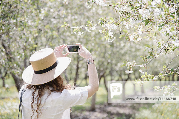 A woman wearing a straw hat taking photographs in an orchard among wild flowers.