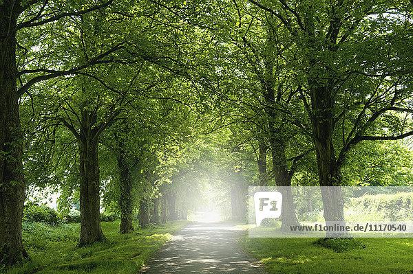 Eine Allee von Bäumen im Sommerlaub  und die Sonne scheint.