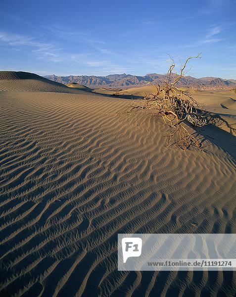 USA  Utah  Desert  Sand Dunes