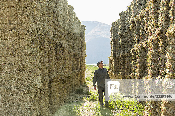 Caucasian farmer checking stacks of hay