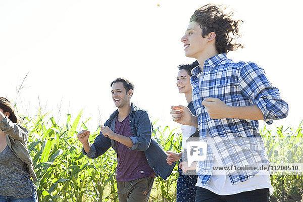 Friends on fun run through cornfield