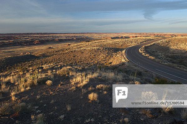 Road through desert landscape in Arizona  USA