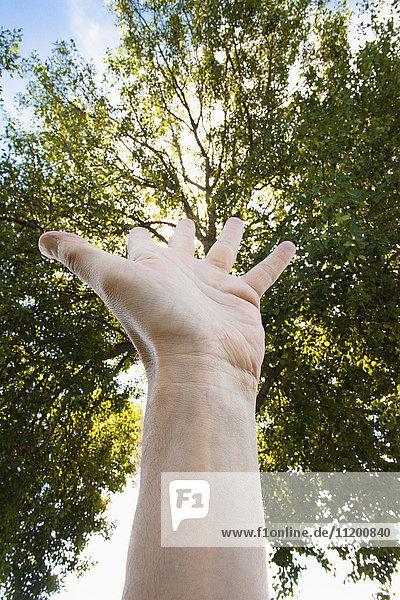 Abgeschnittenes Bild der Hand gegen Bäume