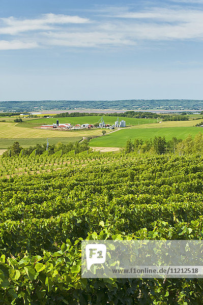 'Annapolis Valley vineyards  near Wolfville; Nova Scotia  Canada'