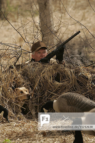 Waterfowl Hunter With Yellow Lab