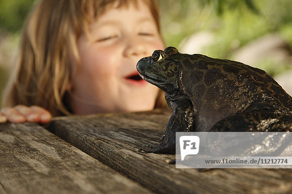 Young Girl Observe Large Bullfrog On The Dock on a Lake